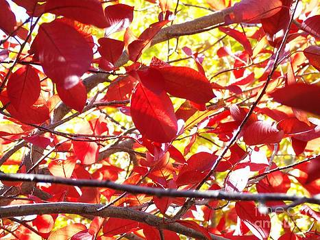 Chokecherry leaves in the autumn by Donna Parlow