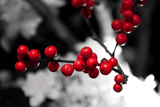 Christmas Berries by Heidi Reyher