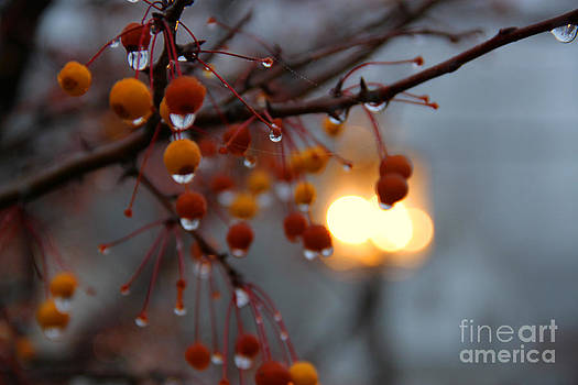 Michael Mooney - Christmas Berries