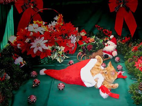 Chantal PhotoPix - Christmas Kittens - Kitty Cat Chewing on Santa
