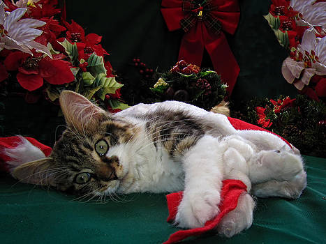 Chantal PhotoPix - Christmas Scene w Kitten - Sleepy Kitty Cat w Paws Stretched Out Waiting for Santa Claus on Xmas Eve