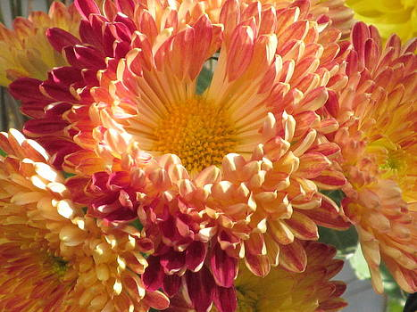 Alfred Ng - chrysanthemum macro