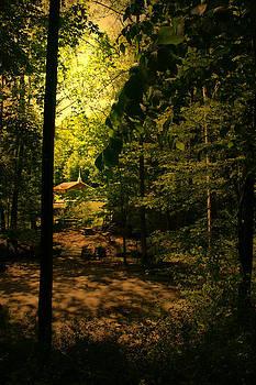 Nina Fosdick - church in the  woods