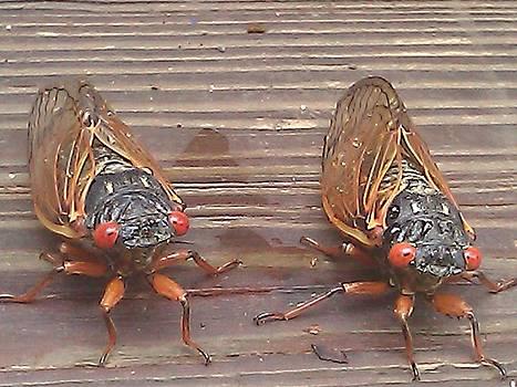 Cicada by Dana Dotson