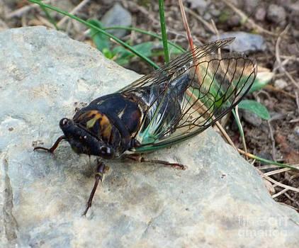 Cicada by John From CNY