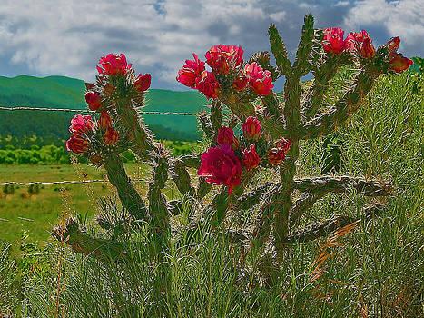 Cimarron Cactus by Charles Frieda