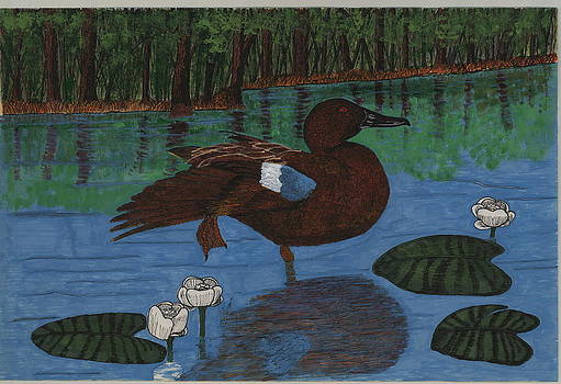 Cinnamon Teal by Tommy Combs