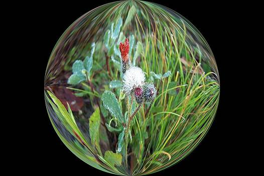 Circle of Tiny Flowers in Dew by Carolyn Reinhart