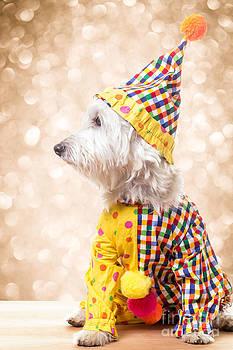 Edward Fielding - Circus Clown Dog