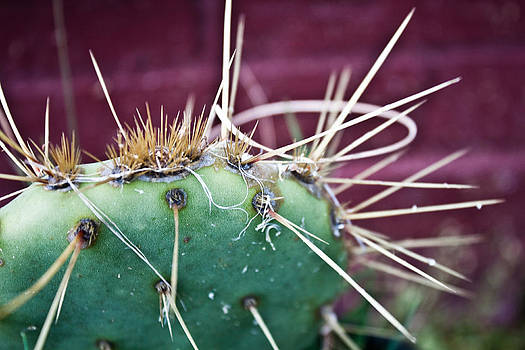 City Cactus by Erik Hovind