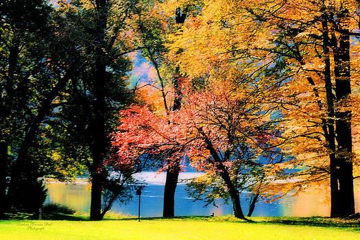 Darlene Bell - Clear Creek Autumn