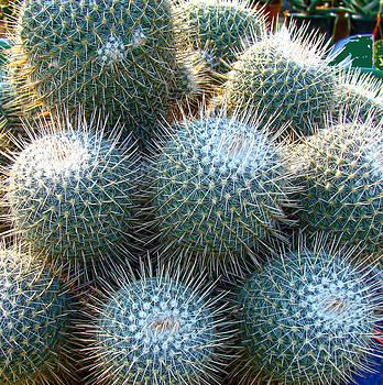 Roy Foos - Clockwork Cacti