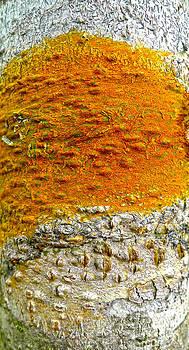 Roy Foos - Clockwork Orange