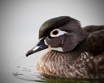 Close Up of a Hen Wood Duck by Jeff Swanson
