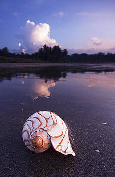 Cloud and Sea-shell by Sydney Alvares