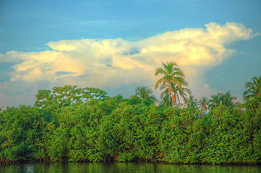 Clouds And Mangroves At Sunrise by Ronald T Williams