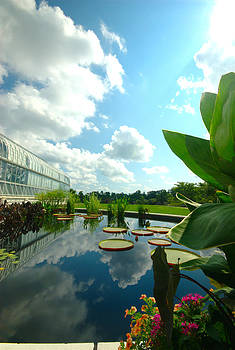 Cloudy reflections and lily pad companions  by Floyd Menezes