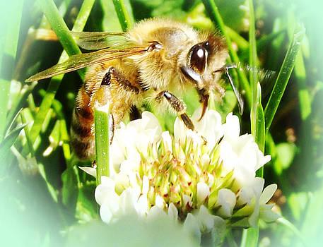 Clover and the Honeybee III by Robin Hewitt