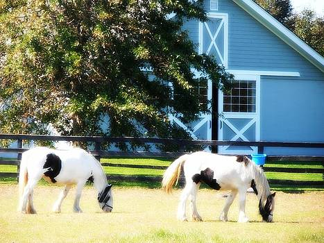 Kimberly Perry - Clydesdale Horses Grazing