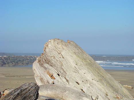Baslee Troutman - Coastal Art Prints Driftwood Ocean Beach Sky