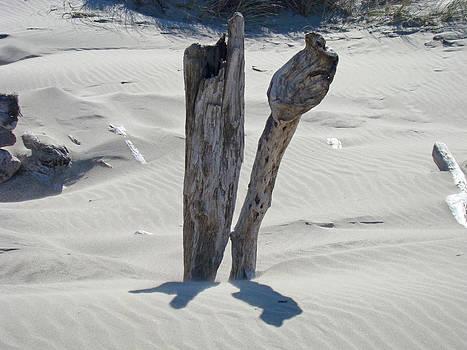 Baslee Troutman - Coastal Driftwood art prints Ocean Shore Sand Beach