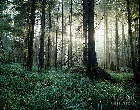 Coastal Forest California by John Wolf