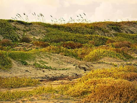 Marilyn Hunt - Coastal plants on dunes