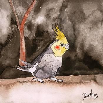 Cockatiel by Derek Mccrea