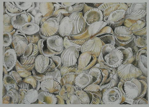 Cockle Shells by Teresa Smith