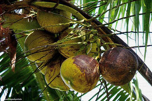 Coconut Fruits by Enrique Rueda