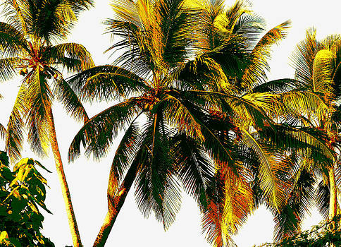 Stuart Brown - Coconut Trees