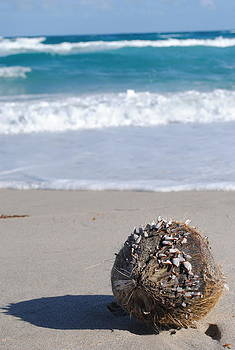 Coconut With Barnacles by Quinn Johnson