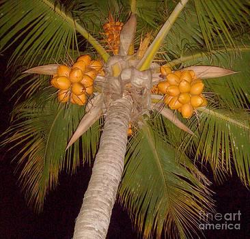 Coconuts - Ile De La Reunion by Francoise Leandre