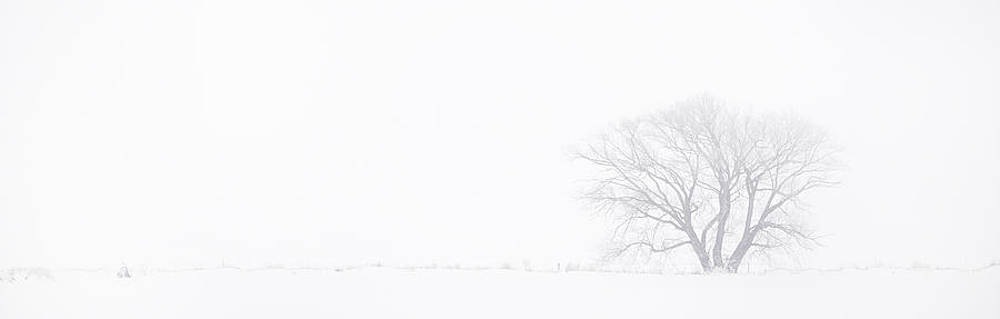 Cold and Lonely by Brian Brown