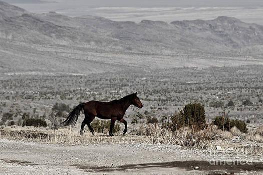 Cold Creek Mustang by Lori Bristow