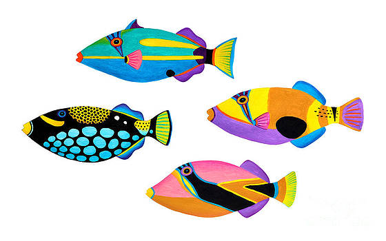 Collection of trigger fishes by Opas Chotiphantawanon