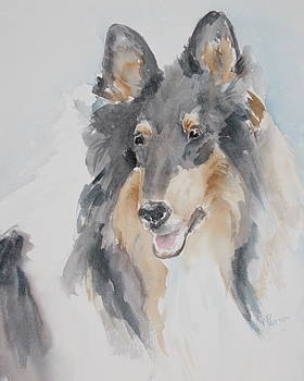 Collie by Rachel Dutton