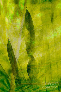 Colocasia Gigantea Reflection by John Pattenden