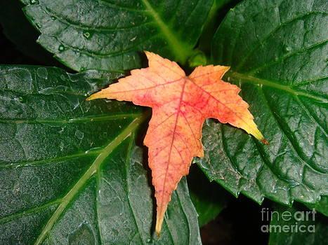 Color Me Orange Five by Catherine DeHart