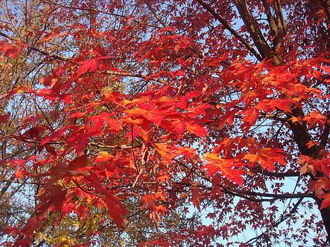 Color Me Orange One by Catherine DeHart
