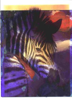 Color Splash Zebra by JDon Cook