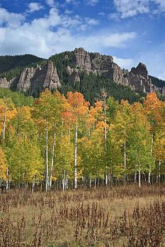 Drusilla Montemayor - Colorado Aspens in Fall