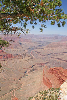 Colorado River Grand Canyon National Park Usa Arizona by Audrey Campion