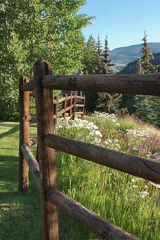 James Woody - Colorado Wildflowers