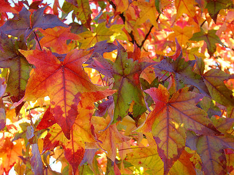 Baslee Troutman - Colorful Autumn Leaves art prints Trees
