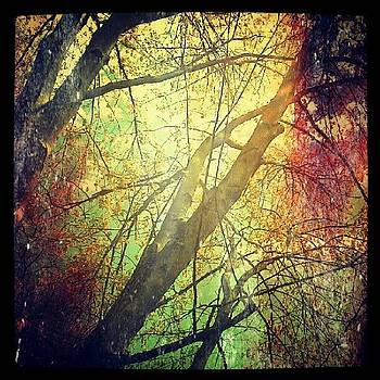 Colors and Trees by Tina Marie