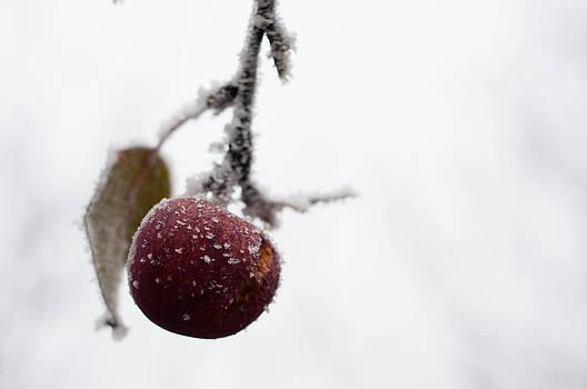 Colors in winter by Iulian Mofteescu