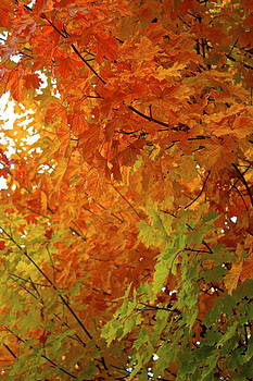 Colors of Autumn by Sylvia Hart