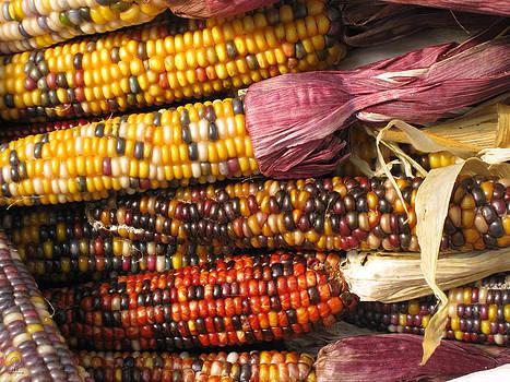 Colors Of Corn by Charles Dancik
