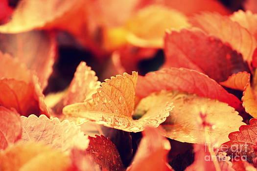 Colour me red by Vishakha Bhagat